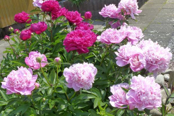 Blumenbeet zum Ferienhaus
